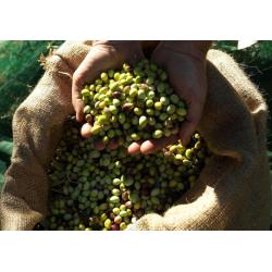 Olivenolie Græsk Ekstra Jomfru Økologisk - Iliada
